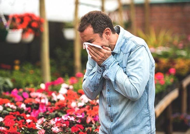 hay fever treatment
