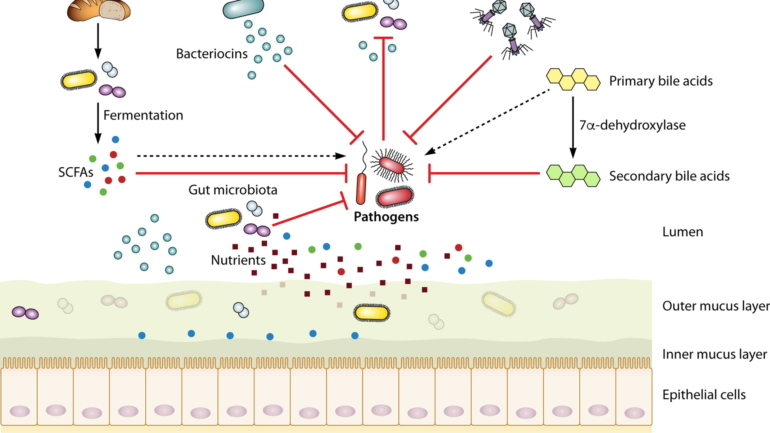 Enteric Bacterial Infections