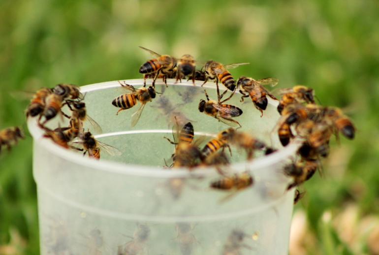 bees pest control near me